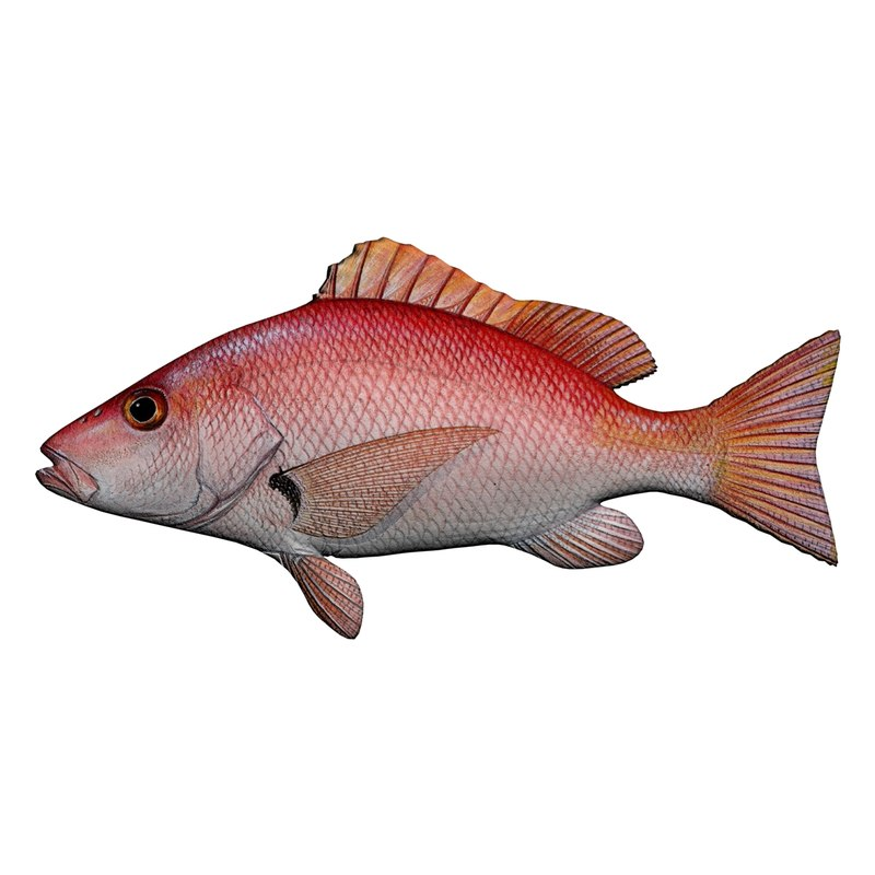 3D red snapper