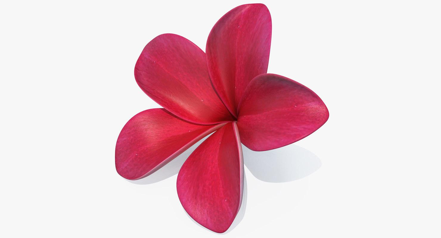 3D plumeria red flower lei model