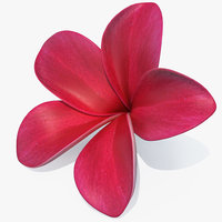 3D plumeria red flower lei model