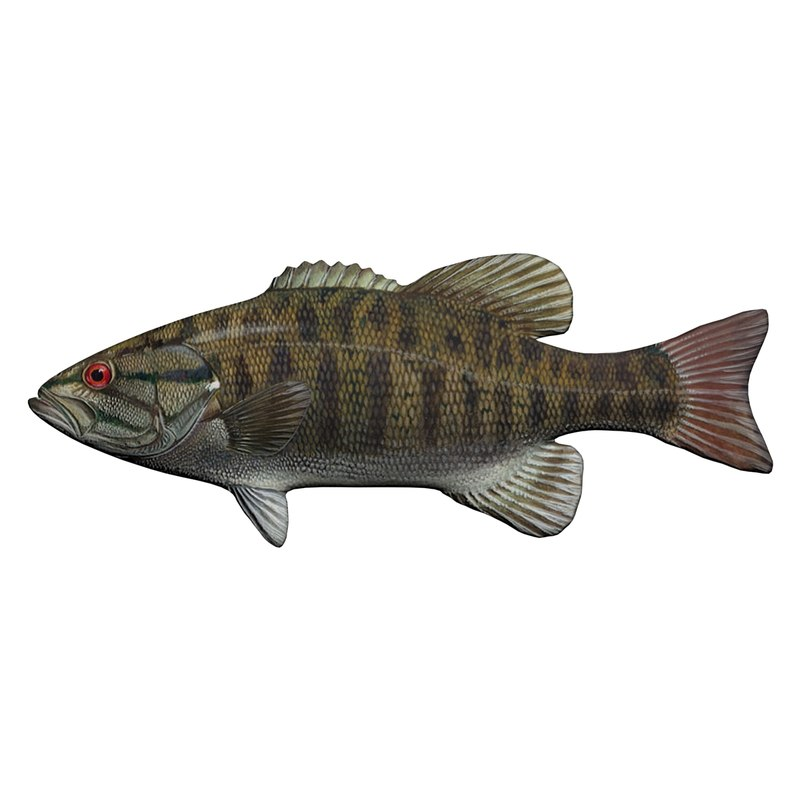 3D model smallmouth bass