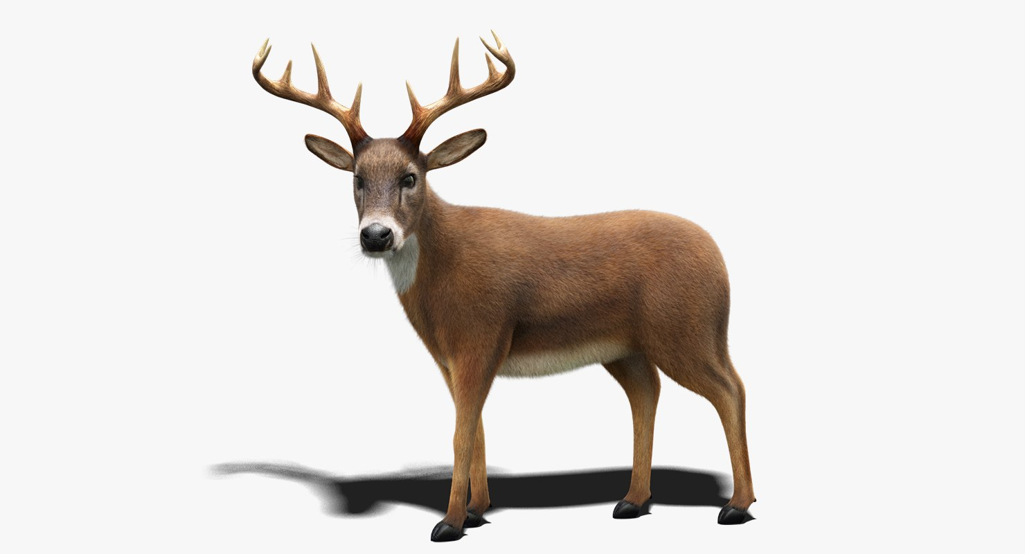 3D model deer fur rigged