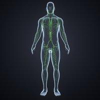 3D body lymphnodes