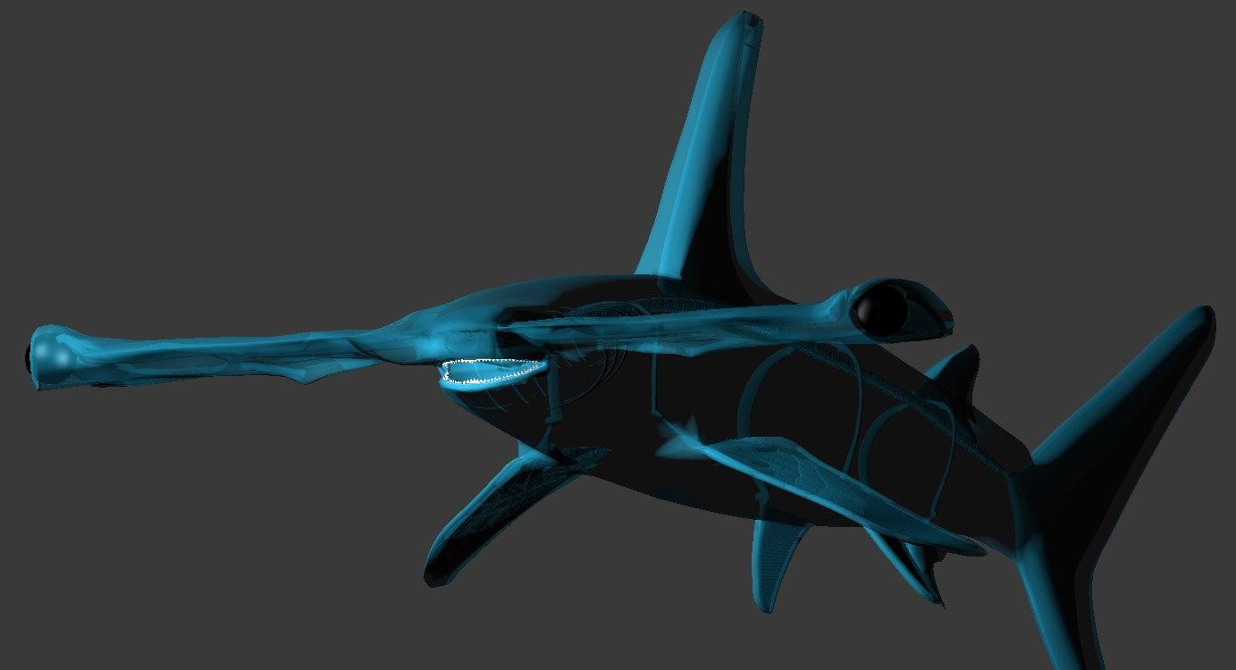 shark skeleton 3D model