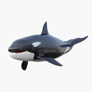 3D killer whale rigging animation model