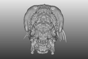 3D yautja alien predator