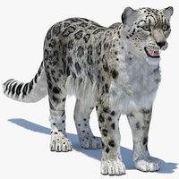 3D model snow leopard 2