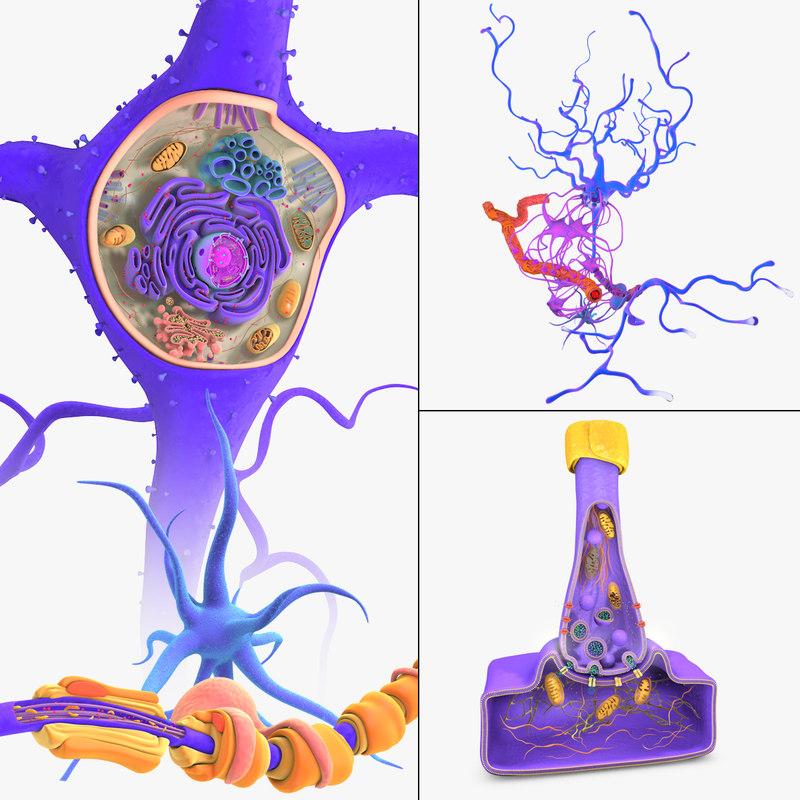 3D neuron receptors cells