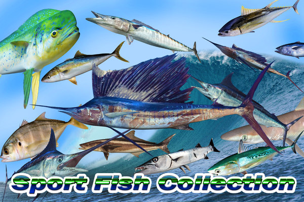 3D sport fish