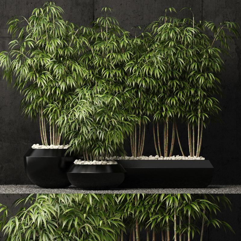3D plants 66