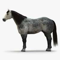 3D horse rigged fur model