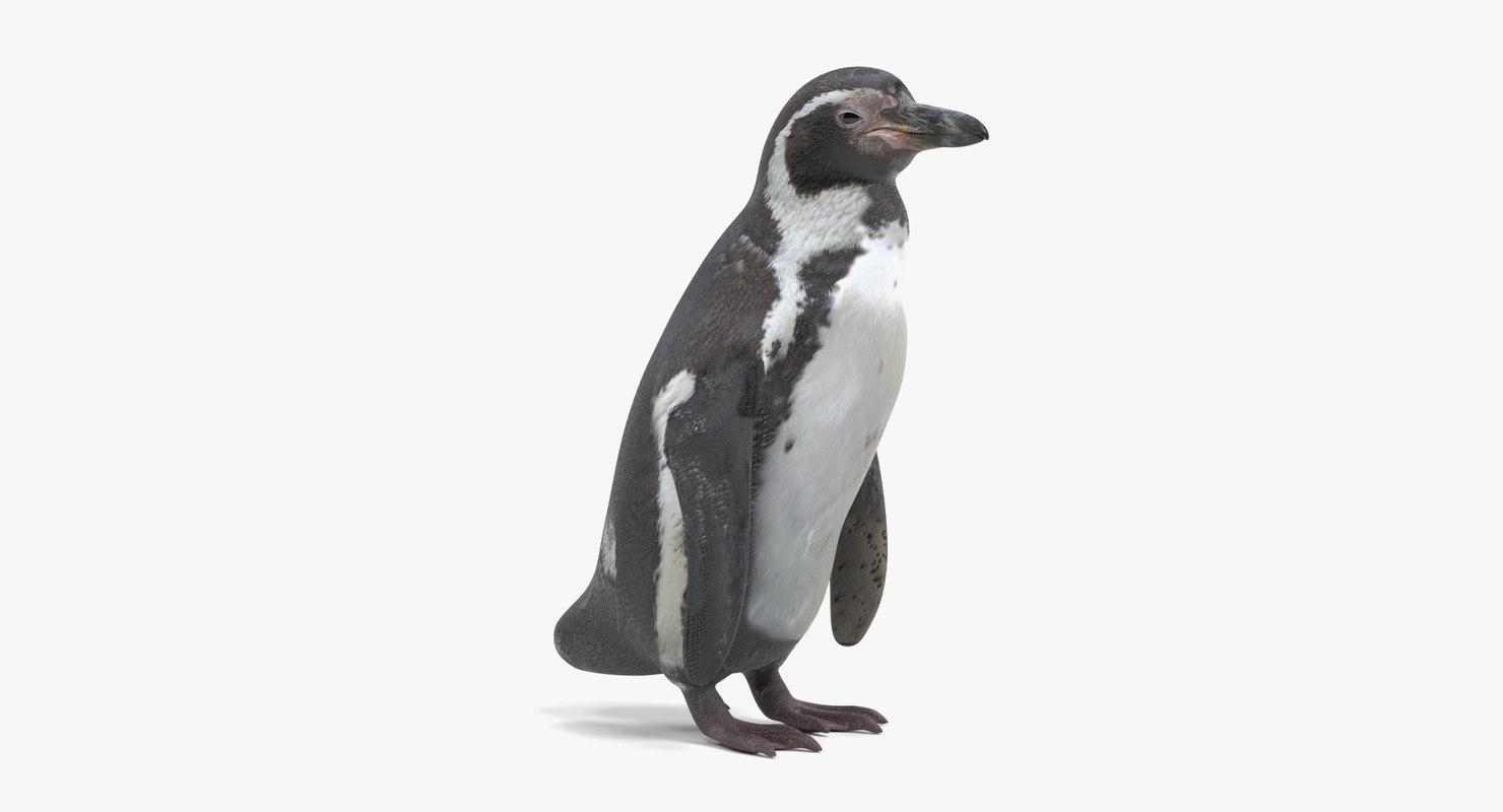 humboldt penguin model
