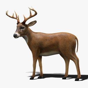 3D deer rigged