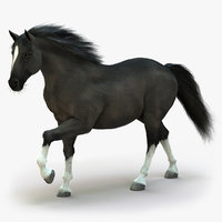 Horse (2) (Black) (ANIMATED) (FUR)