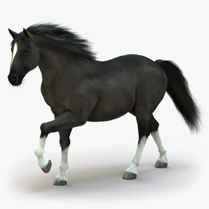 3D horse black animation fur