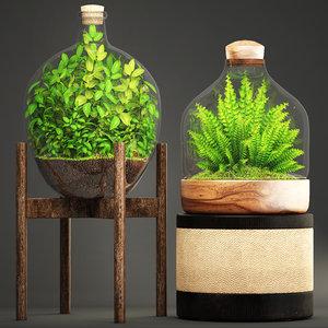 3D florarium fern nephrolepis model