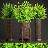 potted plants fern 3D model