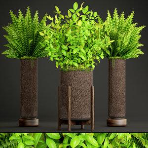 potted plants fern 3D model