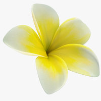 3D plumeria yellow tropical flower