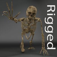 human male skeleton rigged 3D