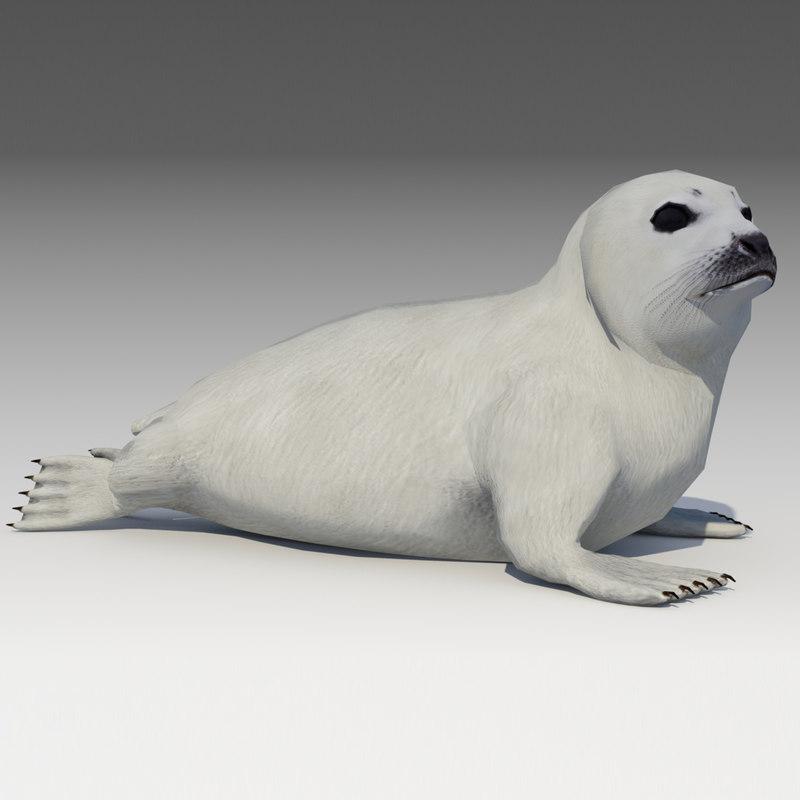 3D model seal baby