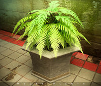 3D home plants model