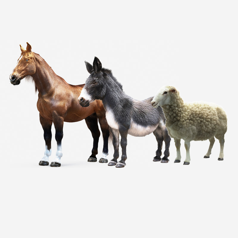 animals horse donkey sheep 3D model