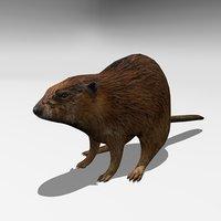beaver 3D model