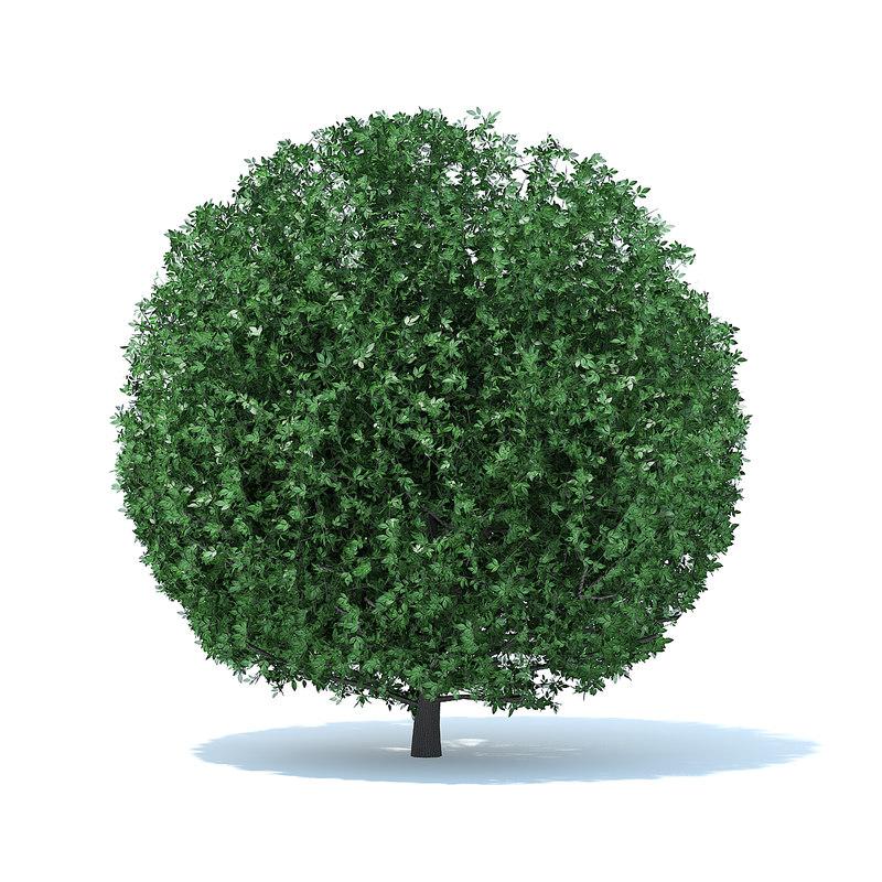 3D spherical shrub model