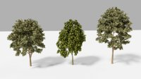 trees realistic 3D