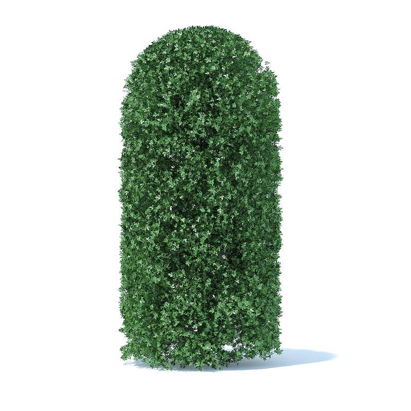 tall shrub model