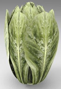 3D lettuce