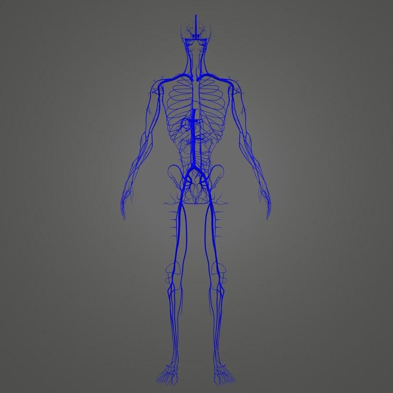 3D veins