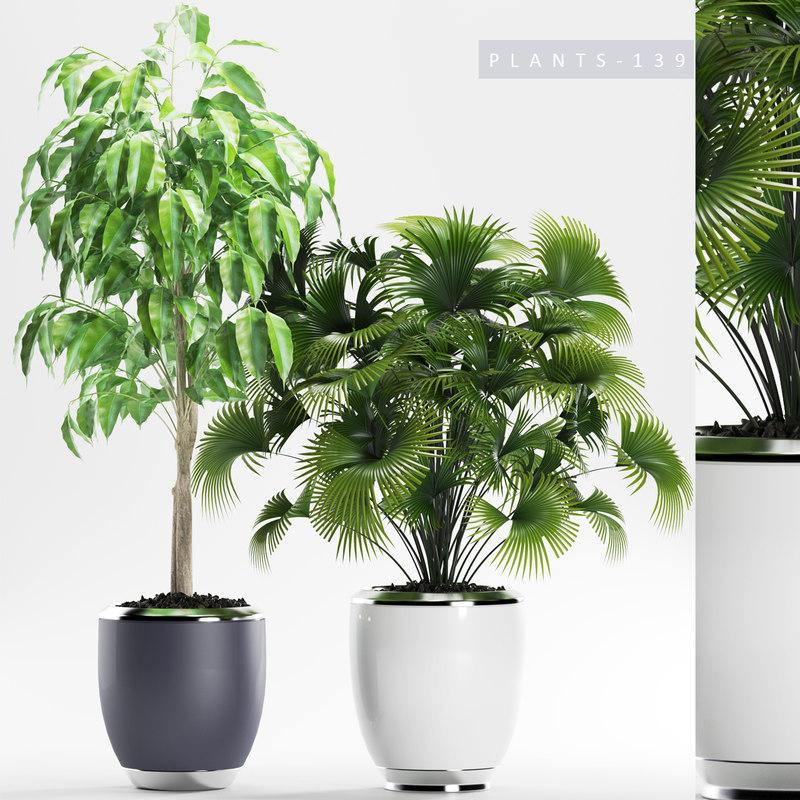 plants 139 palm 3D model