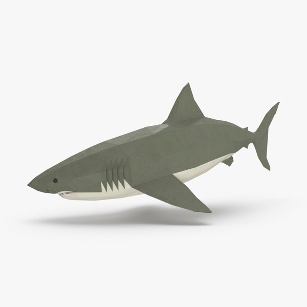 3D model shark---downward