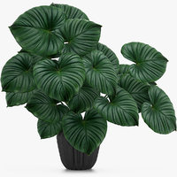 3D tropical leaves model