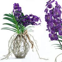 3D realistic vanda orchid flowers