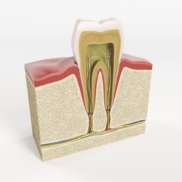 3D tooth structure model