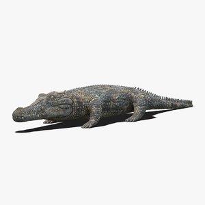 photorealistic crocodile 3D