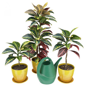 3D model codiaeum croton plants