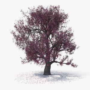 blossom tree 03 model