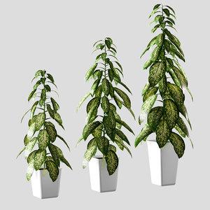 plant pot dieffenbachia 3 3D