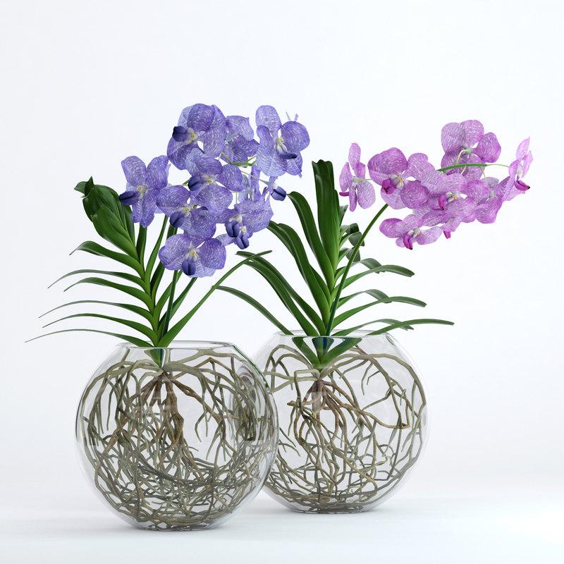 realistic vanda flowers 3D