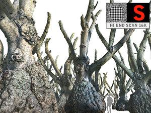huge jungle tree 16k model