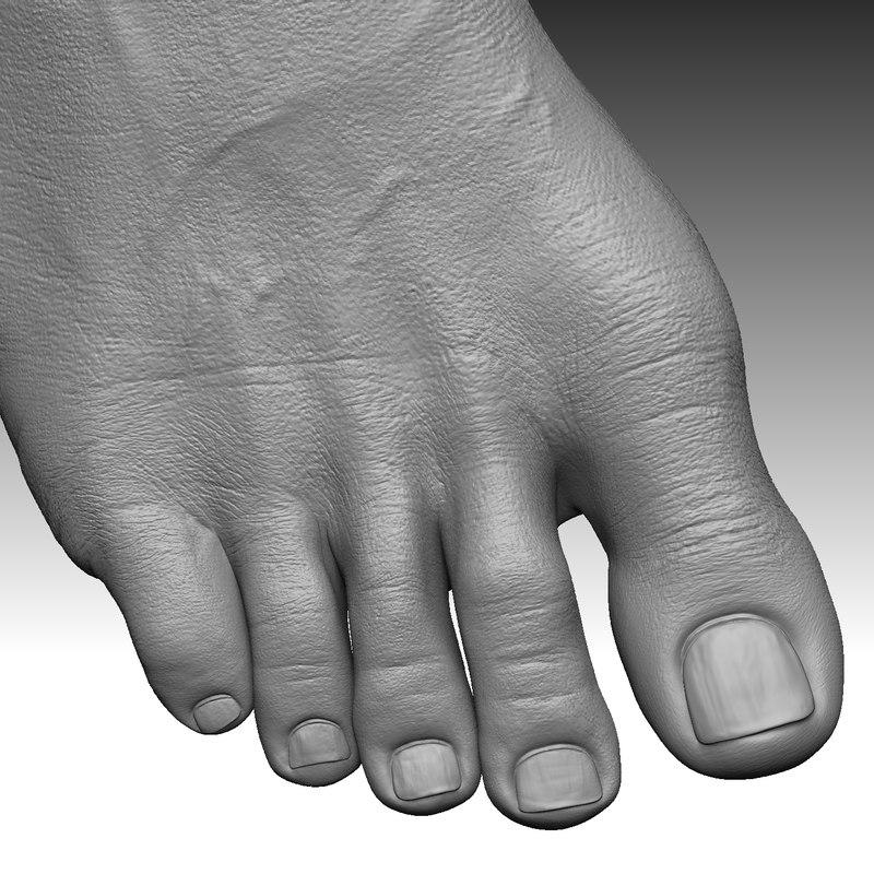 foot realistic 3D model