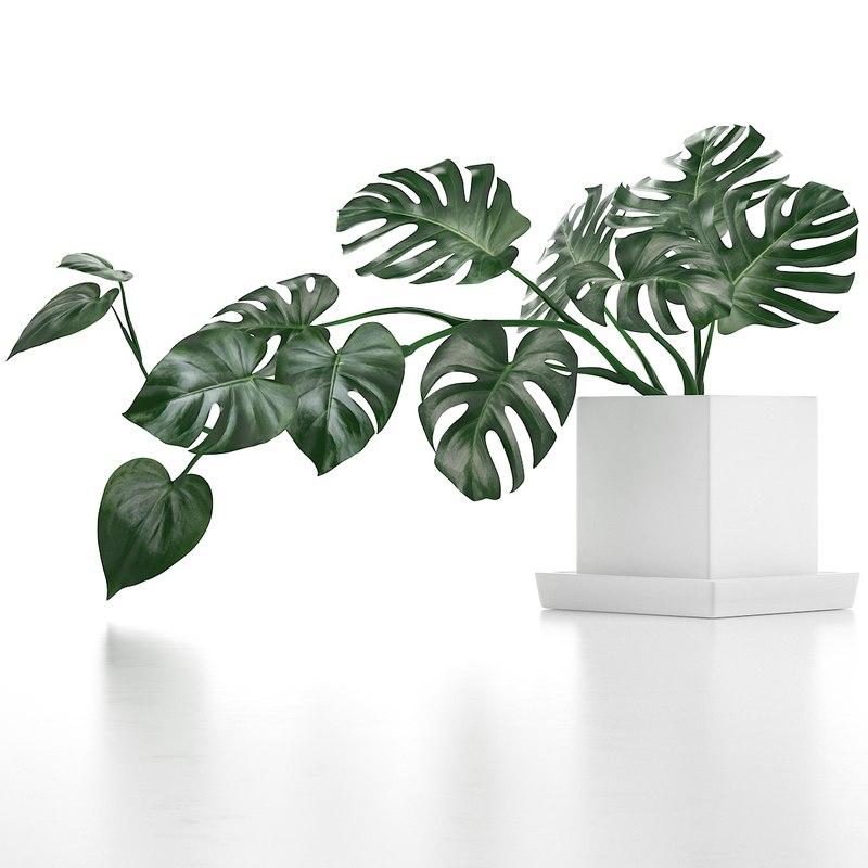 3D model monstera leaves
