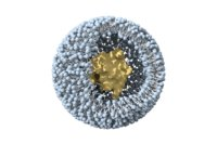 liposome vesicle lipid 3D model