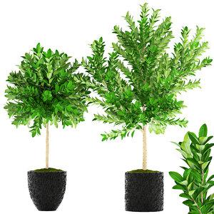 topiary trees model