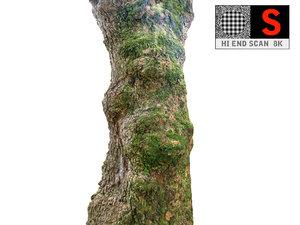 jungle tree 8k 3D model