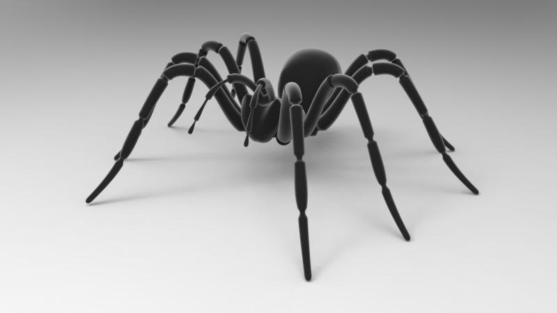 3D spider boris model