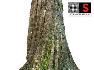 3D jungle tree 8k model